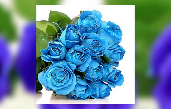Meaning Blue Rose
