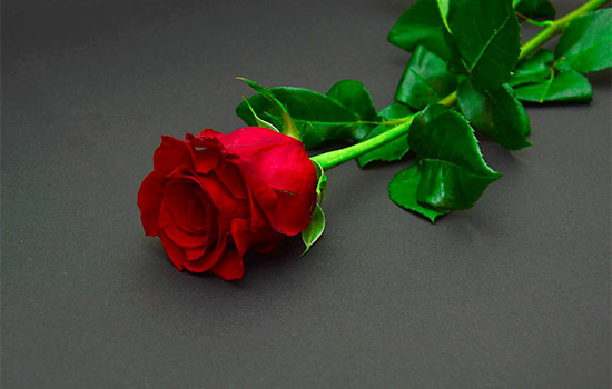 The story Behind Red Roses