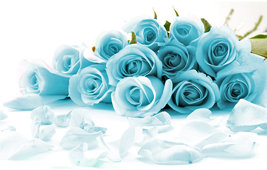 You must know Detail Blue Roses Meaning