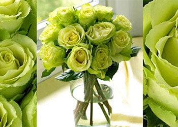 Green Rose Meaning