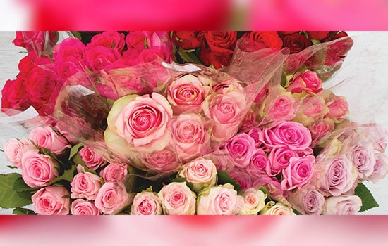 Red and pink roses meaning
