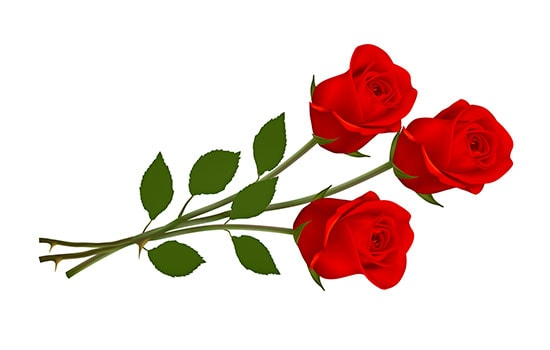 Three Red Roses Meaning