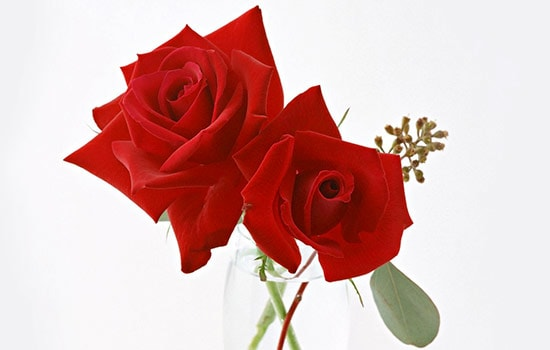 Two Rose Meaning