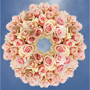 Champagne Roses Meaning
