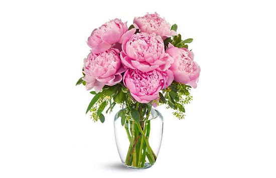 Peonies rose