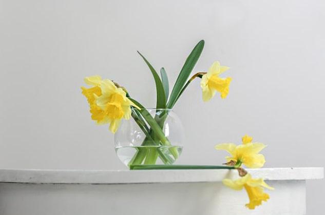 Daffodil that mean rebirth
