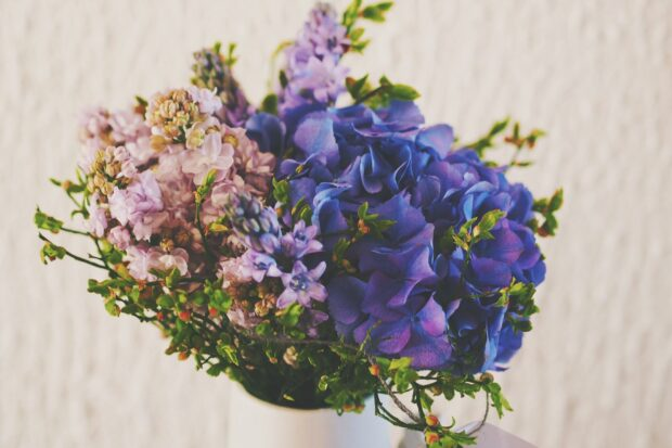 Meaning Behind Violets Flower