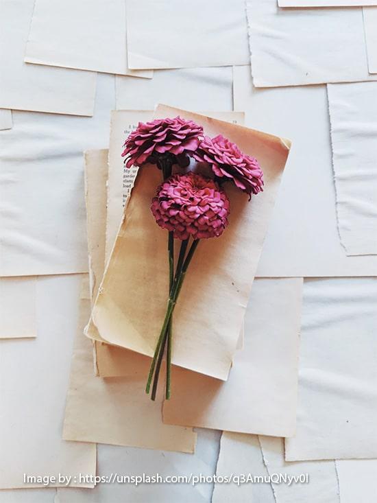 Symbolism of Zinnias Flower