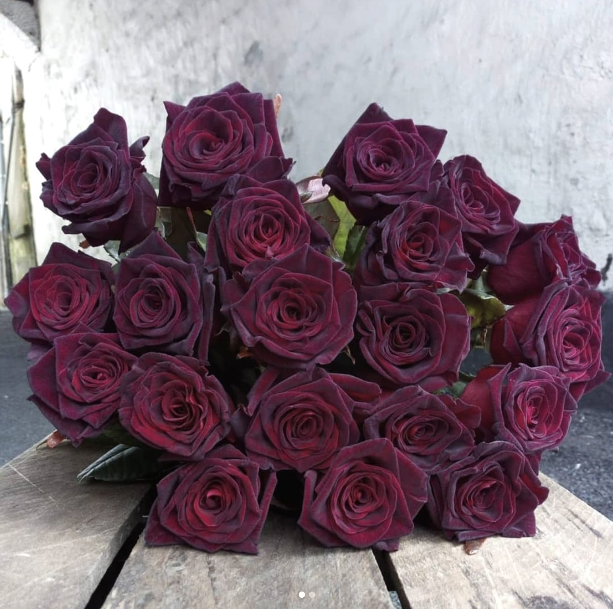 Baccara Rose Meaning